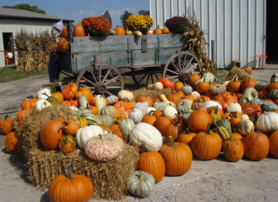 Pumpkins And Gourds Of All Colors, Shapes And Sizes!